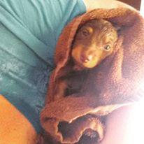midgee-first-bath