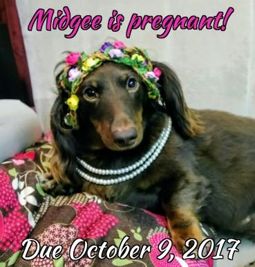 Midgee!