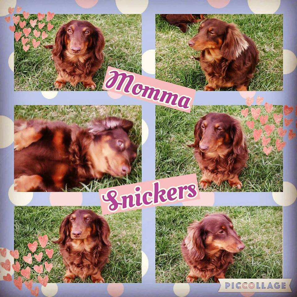 momma-snickers