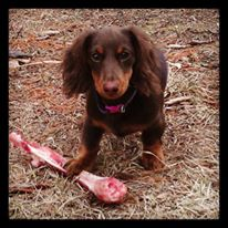 snickers-1st-deer-bone