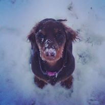snickers-baby-in-snow